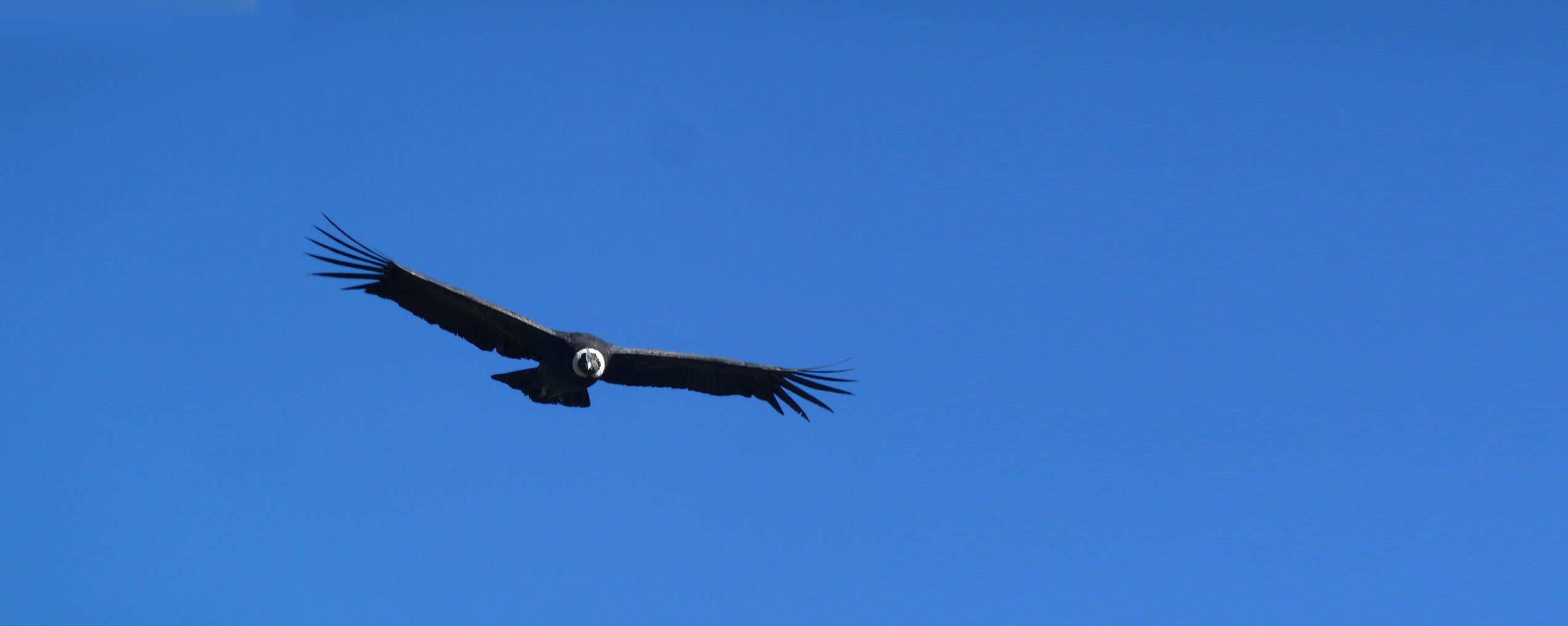 Condor2