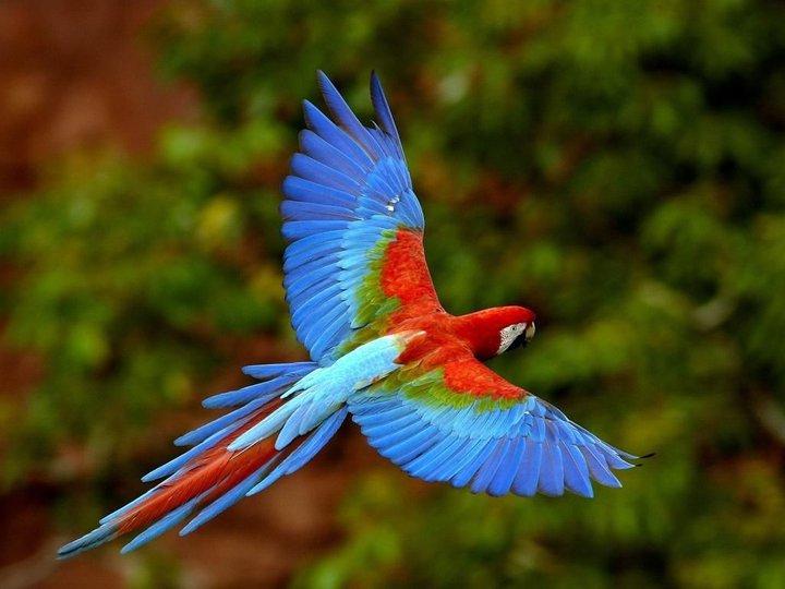 Parc national del Manu (5)