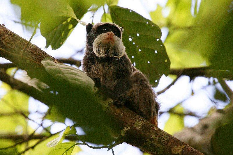 Parc national del Manu