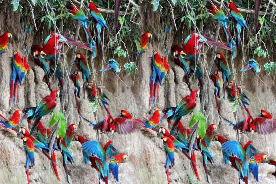 Parc national del manu (2)
